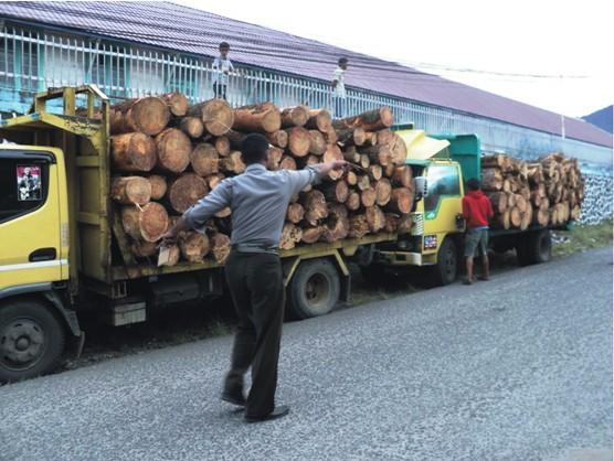 tpl 3 Gabungan Elemen Rakyat Tapsel Tangkap Truck Kayu Illegal PT. TPL Dishut Membungkam DPRD Ciut