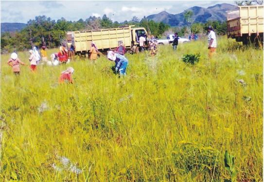 %name Menunggangi Pekerja dari Tabusira : Pt. TPL Kembali Serobot Tanah Milik Warga Tanjung Sunge