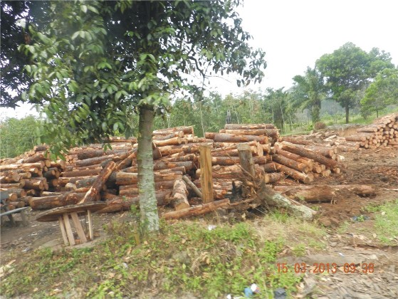 graphic1 Mafia Pinus Larikan Kayu Tangkapan Polres Tapsel