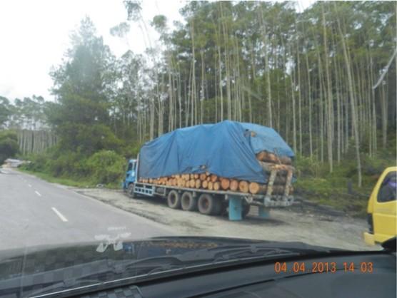 graphic2 Mafia Pinus Larikan Kayu Tangkapan Polres Tapsel