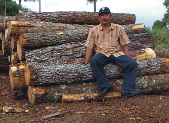 graphic5 Mafia Pinus Larikan Kayu Tangkapan Polres Tapsel